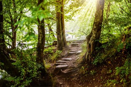 Pad in oerwoud